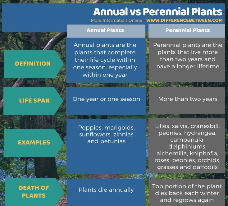 Difference Between Annual and Perennial Plants - Tabular Form