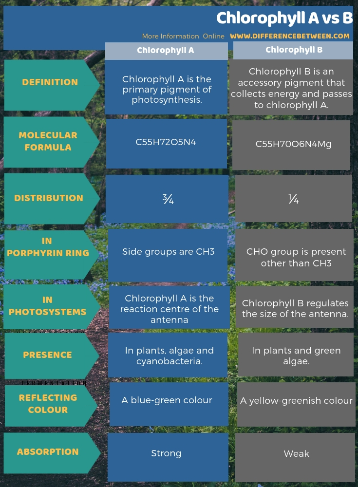 Difference Between Chlorophyll A and B in Tabular Form