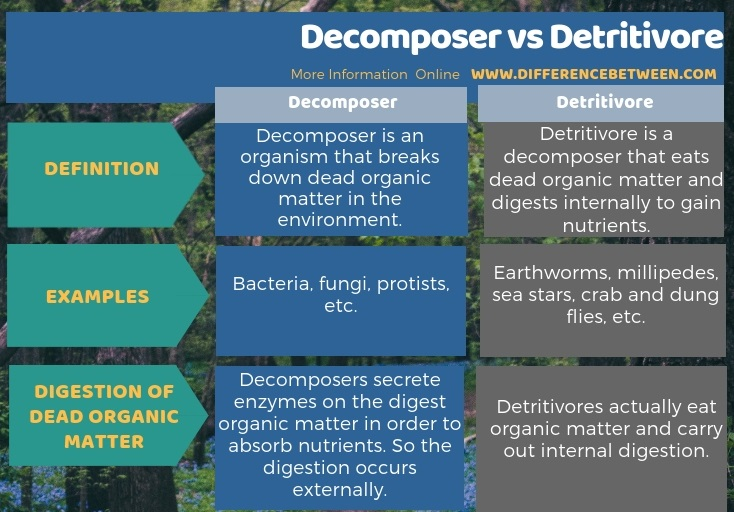 Difference Between Decomposer and Detritivore in Tabular Form