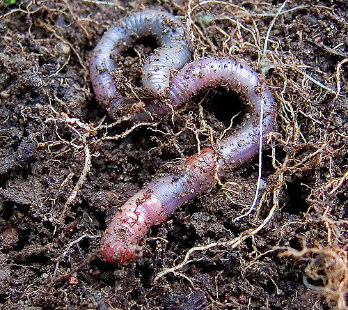 Key Difference Between Decomposer and Detritivore