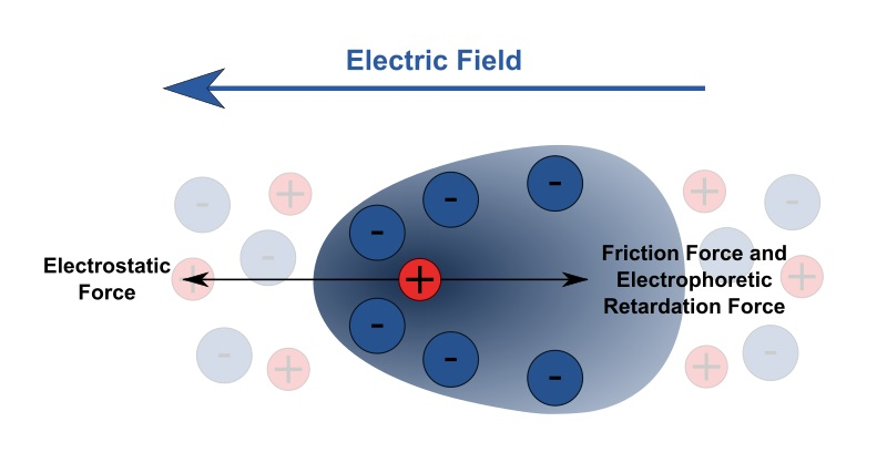 Difference Between Electrophoresis and Chromatography