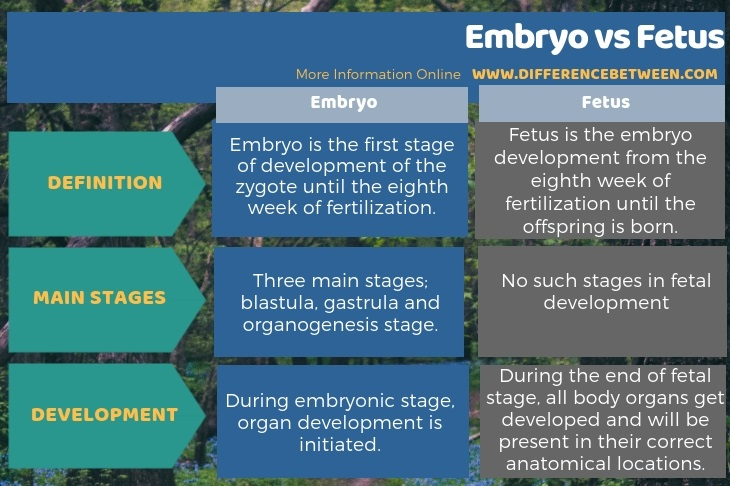 Difference Between Embryo and Fetus in Tabular Form
