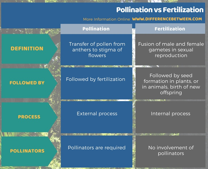 Difference Between Pollination and Fertilization in Tabular Form
