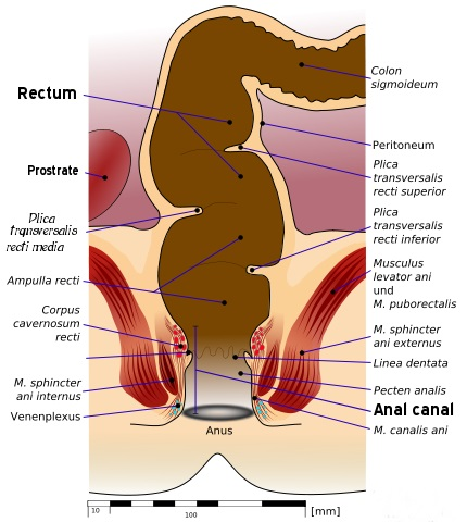 Difference Between Anus and Cloaca_Fig 01