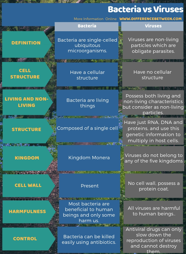 Difference Between Bacteria and Viruses in Tabular Form