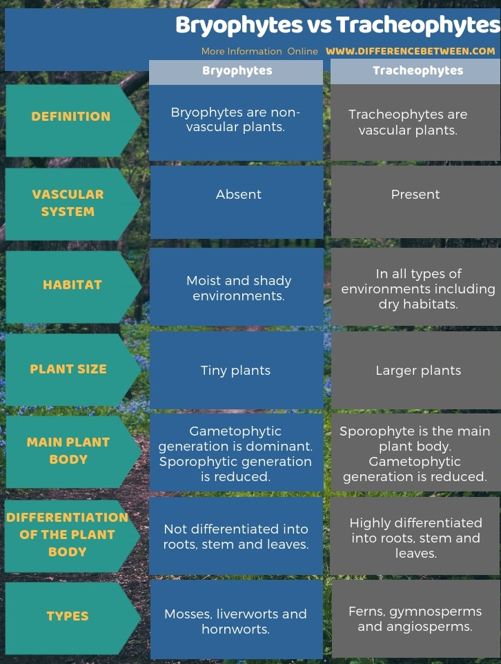 Difference Between Bryophytes and Tracheophytes in Tabular Form