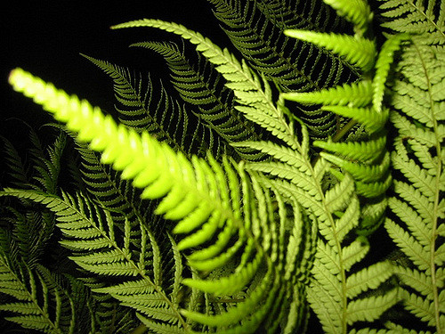Key Difference Between Bryophytes and Tracheophytes