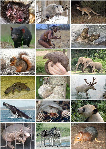 Difference Between Mammal and Marsupial_Fig 01