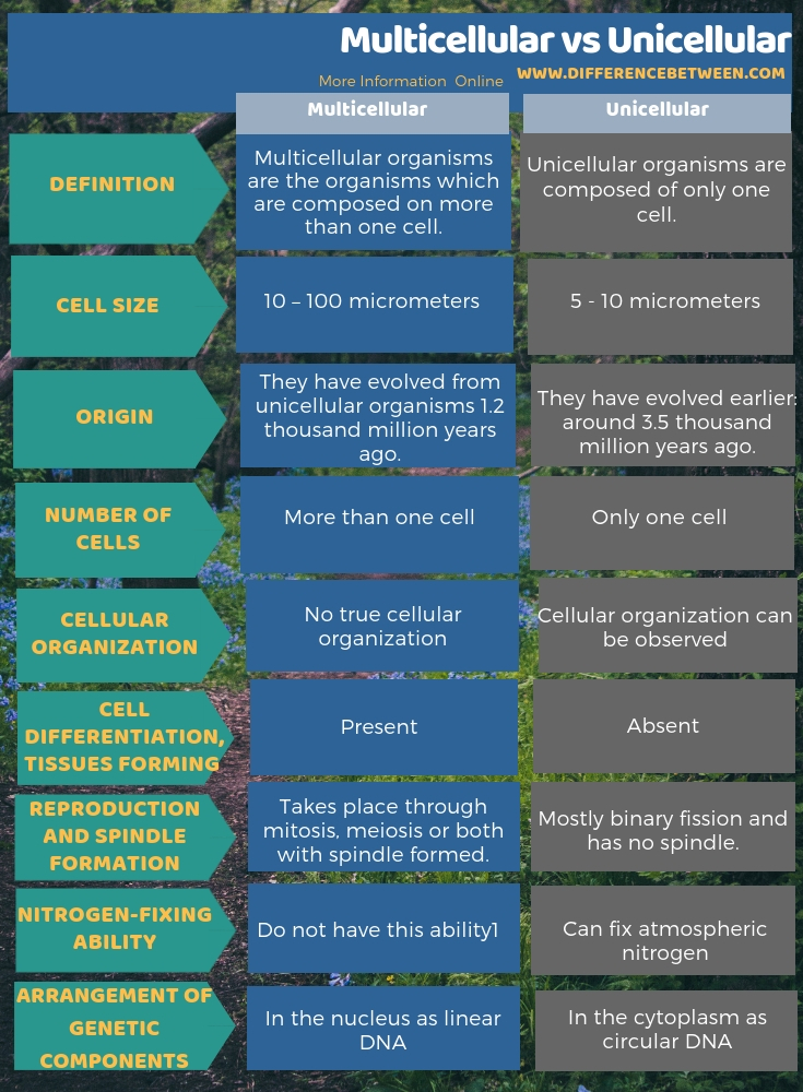 Difference Between Multicellular and Unicellular in Tabular Form