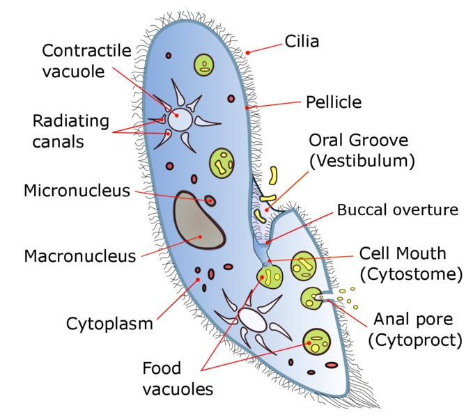 Difference Between Multicellular and Unicellular_Fig 02