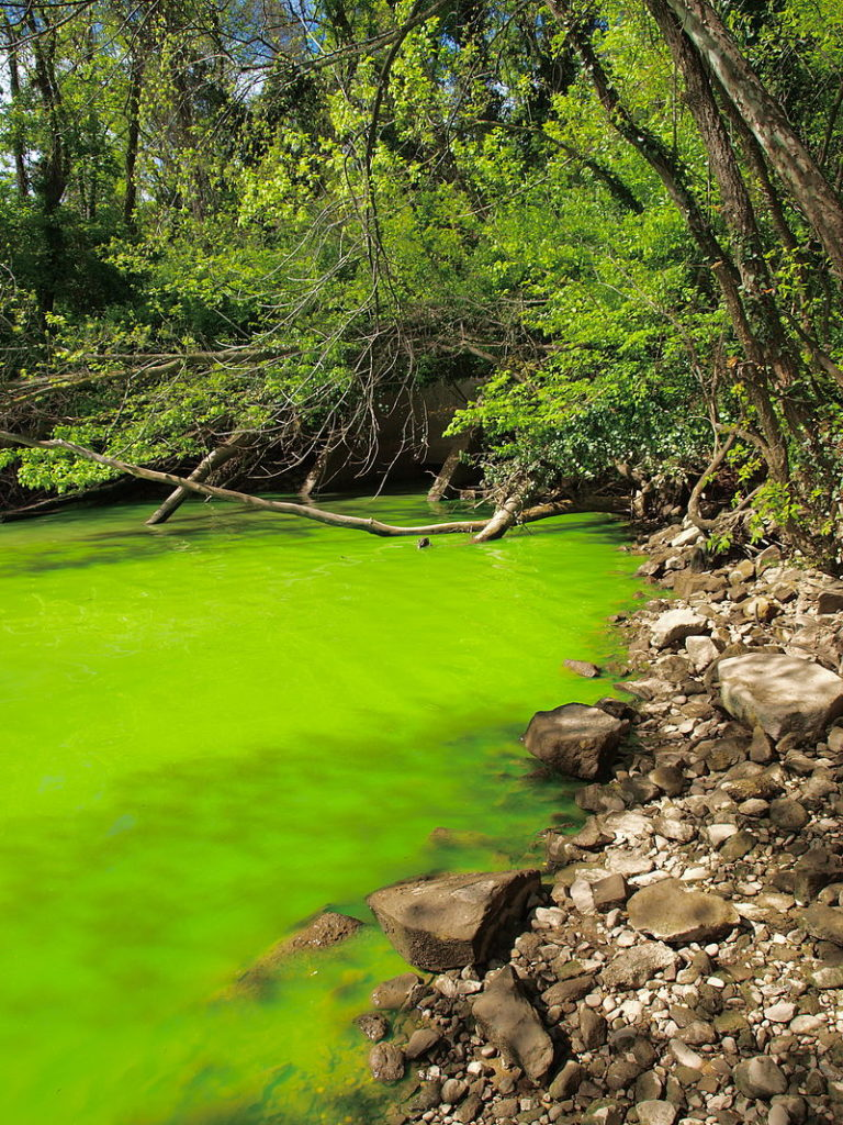 Difference Between Eutrophication and Succession