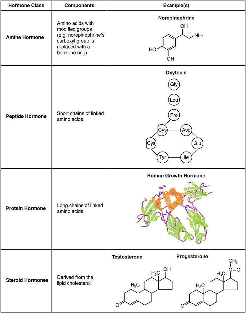 Key Difference Between Neurotransmitters and Hormones