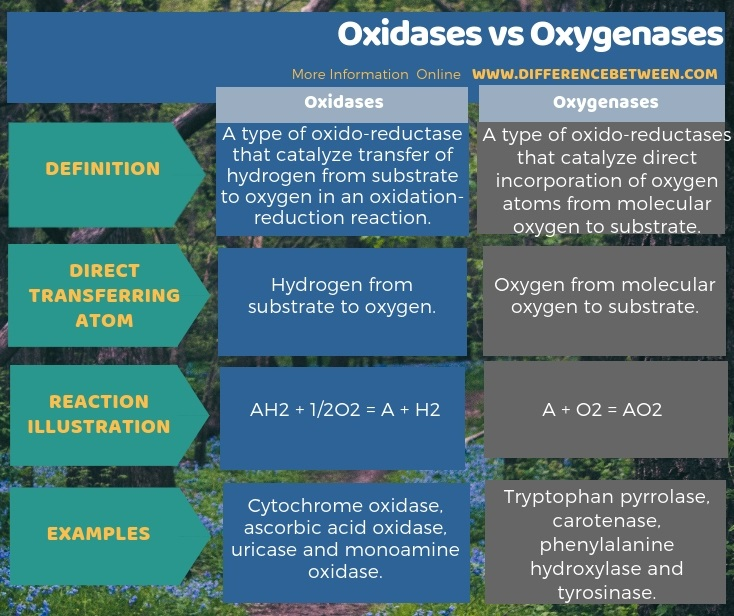 Difference Between Oxidases and Oxygenases in Tabular Form