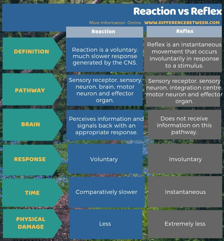 Difference Between Reaction and Reflex in Tabular Form