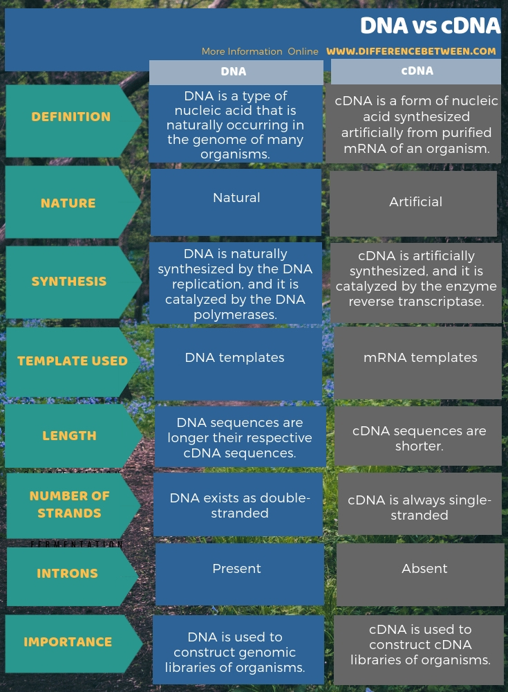 Difference Between DNA and cDNA in Tabular Form