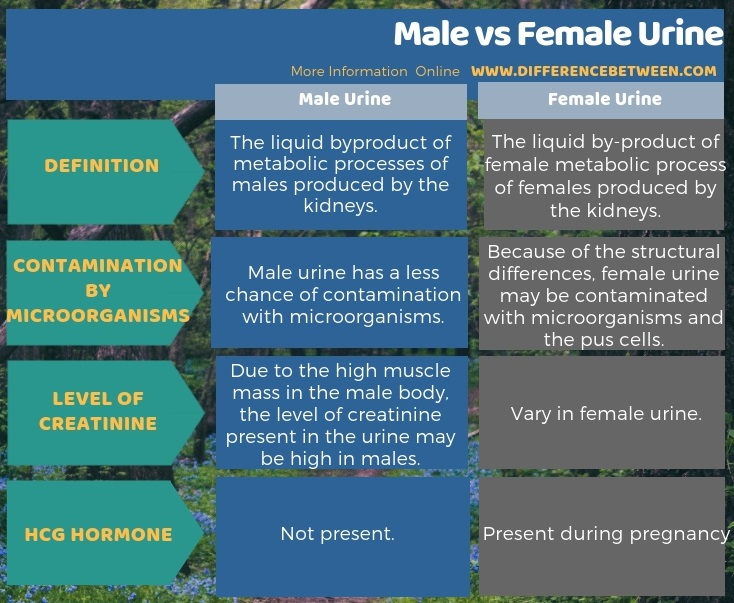 Difference Between Male and Female Urine in Tabular Form