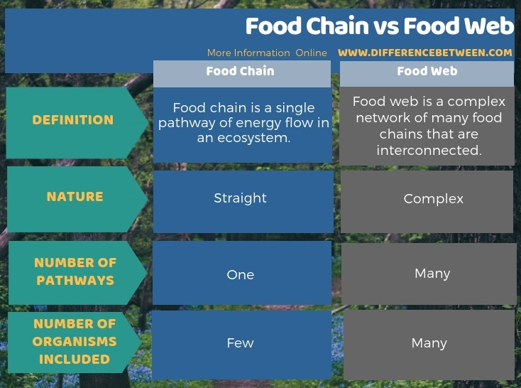 Difference Between Food Chain and Food Web in Tabular Form