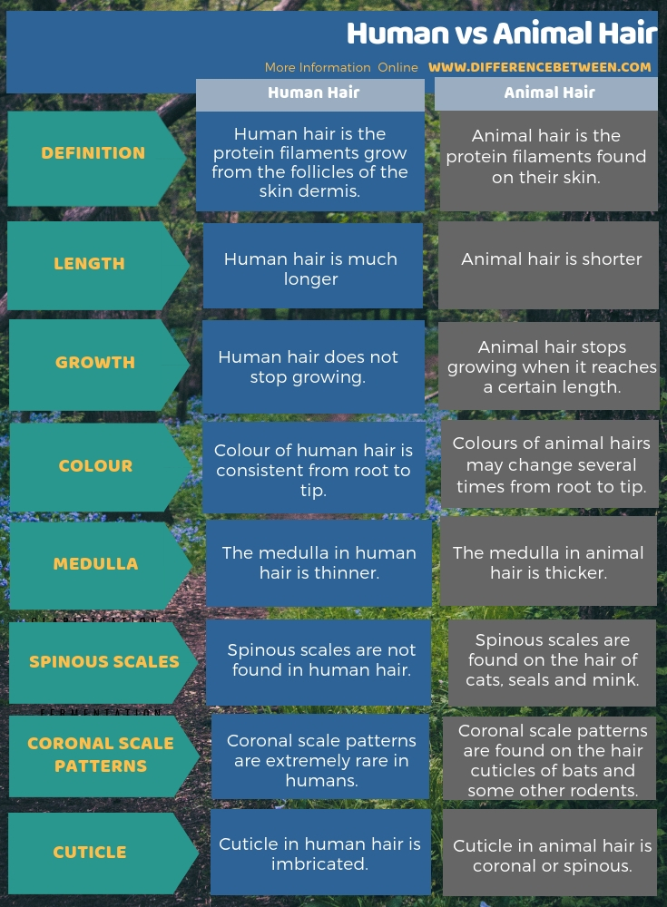 Difference Between Human and Animal Hair in Tabular Form