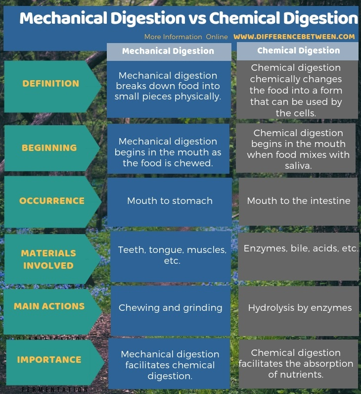 Difference Between Mechanical Digestion and Chemical Digestion in Tabular Form