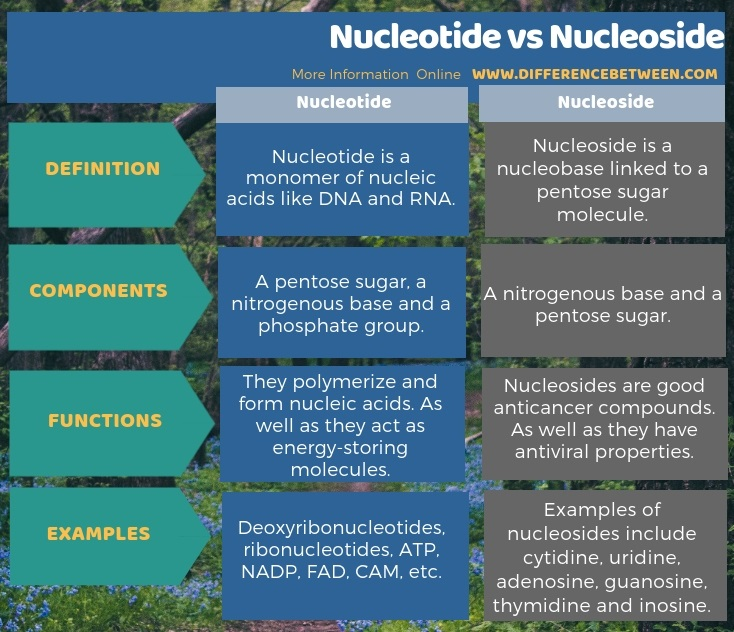 Difference Between Nucleotide and Nucleoside in Tabular Form