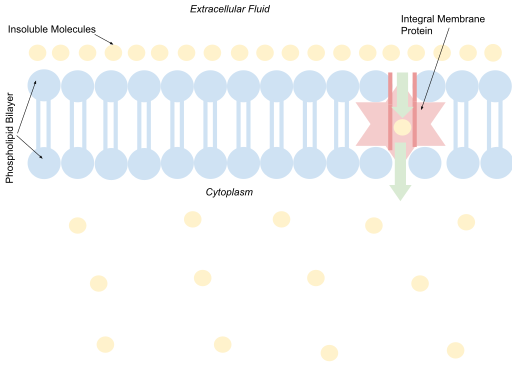 Key Difference Between Simple Diffusion and Facilitated Diffusion