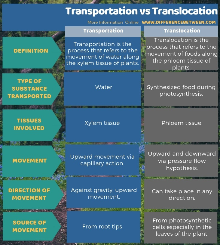 Difference Between Transportation and Translocation in Tabular Form