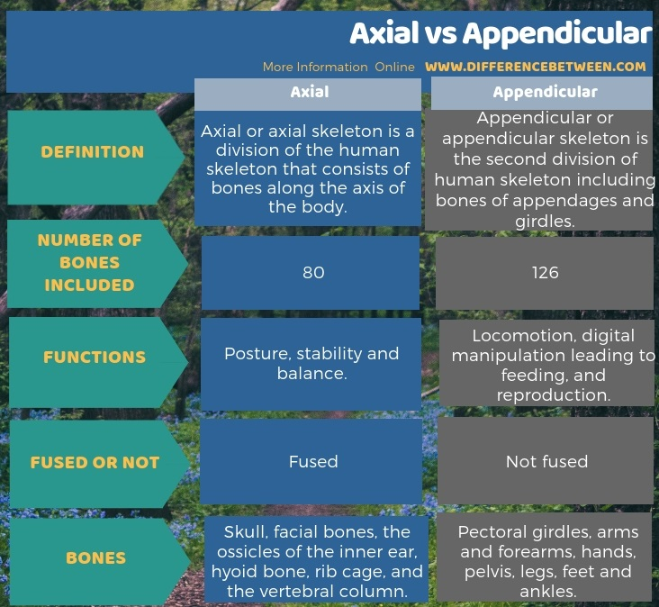 Difference Between Axial and Appendicular in Tabular Form
