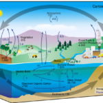 Difference Between Bio Carbon and Fossil Carbon