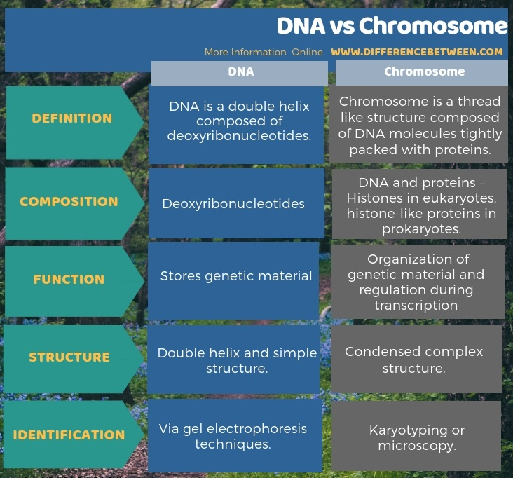 Difference Between Dna And Chromosome