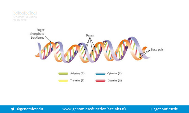 Key Difference Between DNA and Chromosome