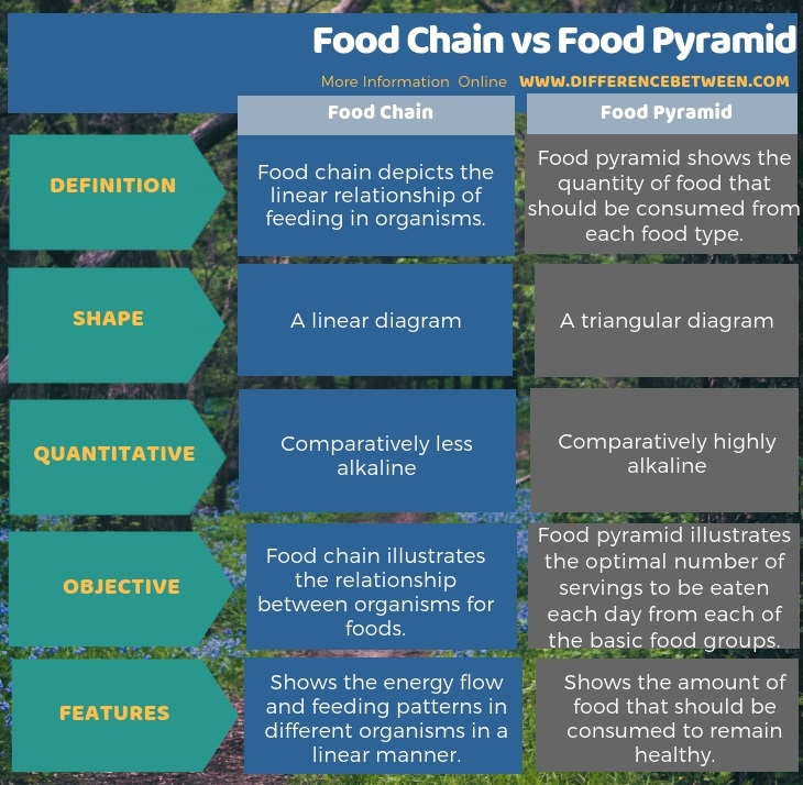 Difference Between Food Chain and Food Pyramid in Tabular Form