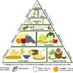 Difference Between Food Chain and Food Pyramid