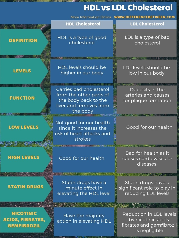 Difference Between Hdl And Ldl Cholesterol