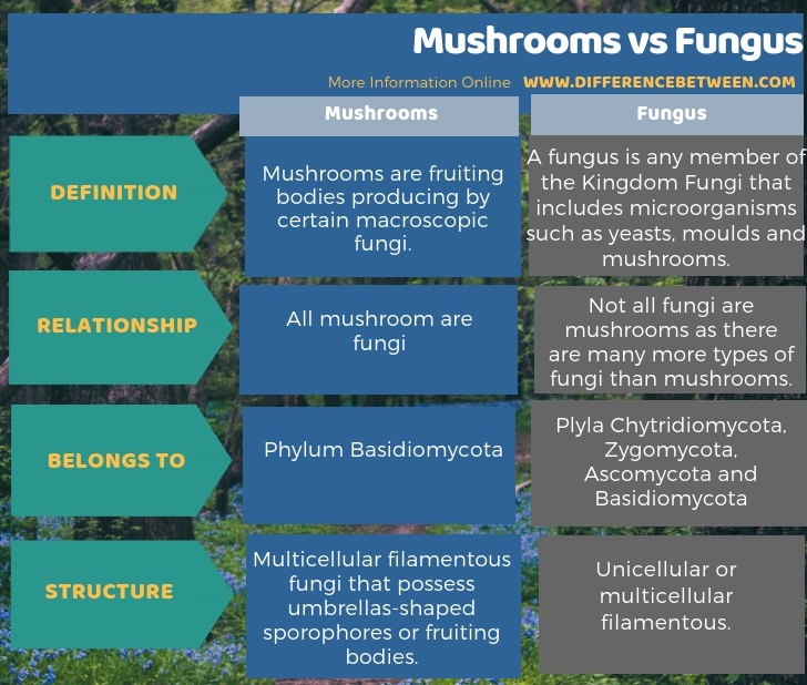 Difference Between Mushrooms and Fungus in Tabular Form