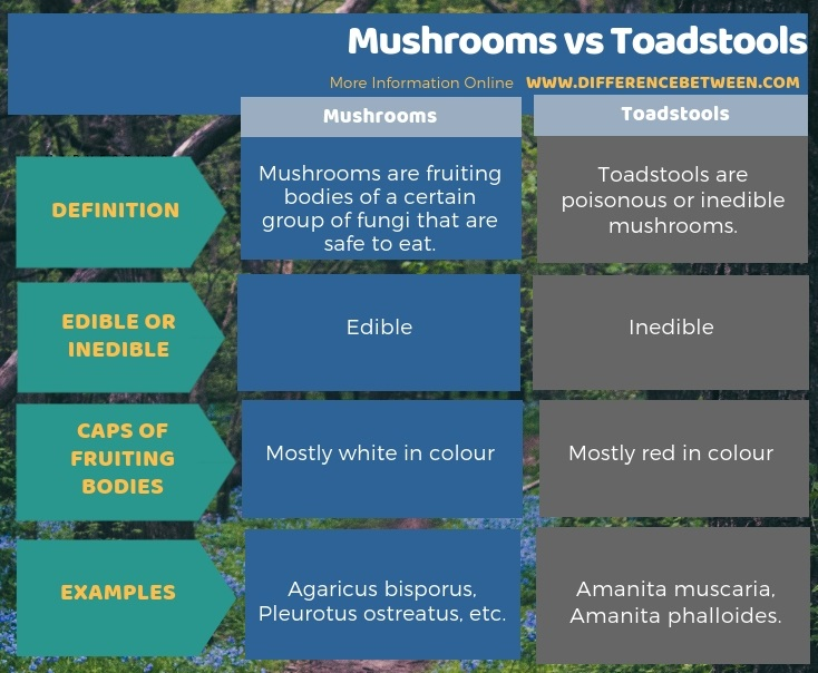 Difference Between Mushrooms and Toadstools in Tabular Form