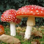 Difference Between Mushrooms and Toadstools