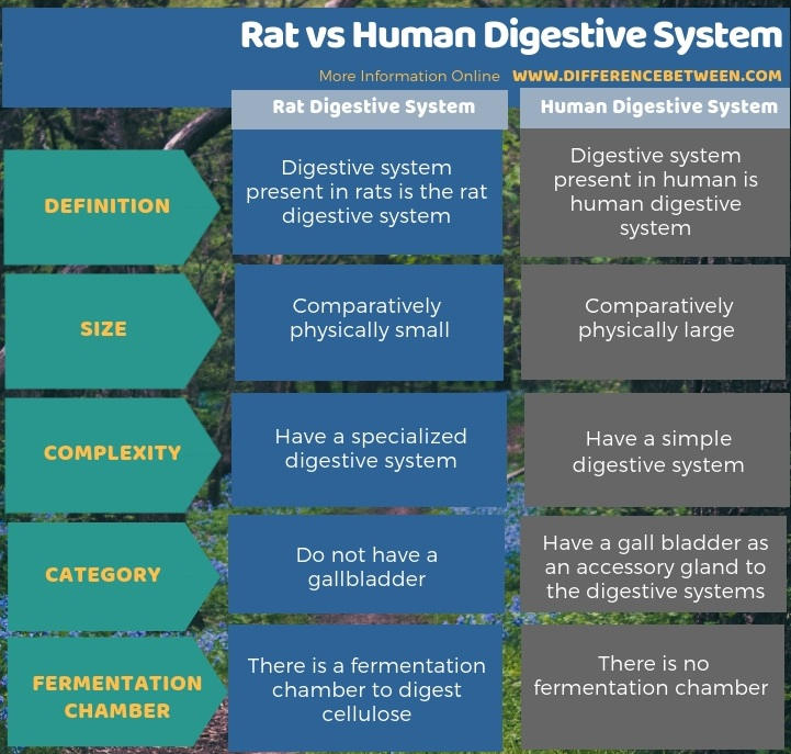 Difference Between Rat and Human Digestive System - Tabular Form