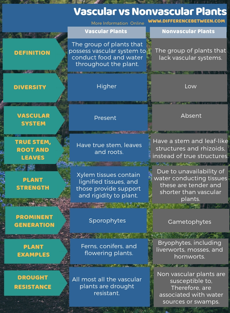 Difference Between Vascular And Nonvascular Plants L