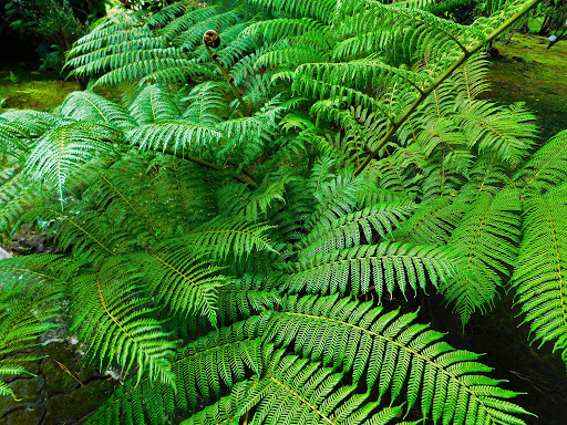 Difference Between Vascular and Nonvascular Plants l ...