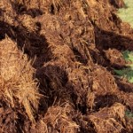 Difference Between Natural and Chemical Fertilizers