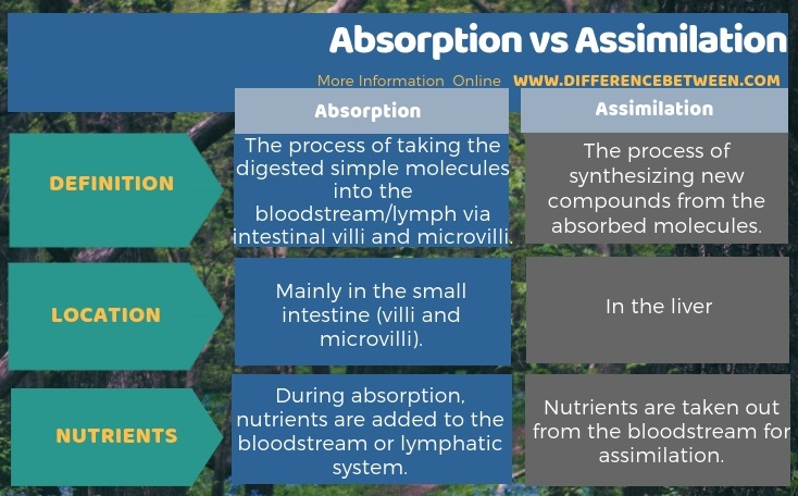 Difference Between Absorption and Assimilation in Tabular Form