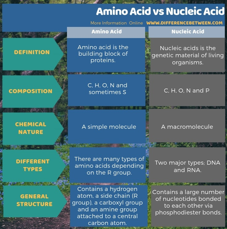 Difference Between Amino Acid and Nucleic Acid in Tabular Form