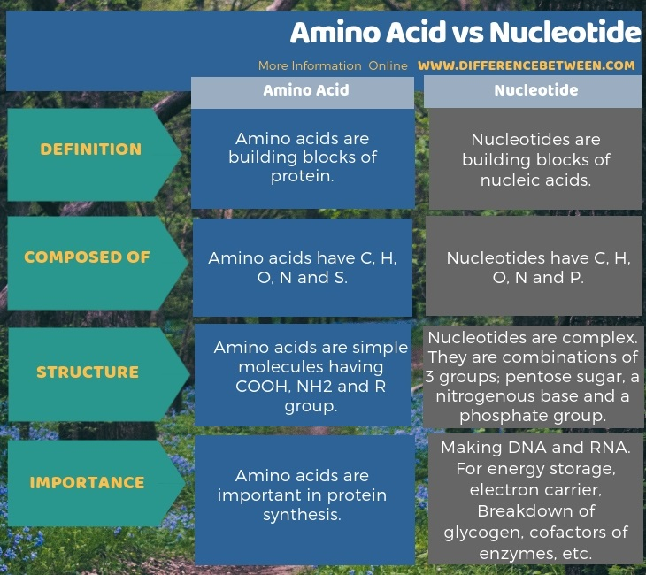 Difference Between Amino Acid and Nucleotide in Tabular Form