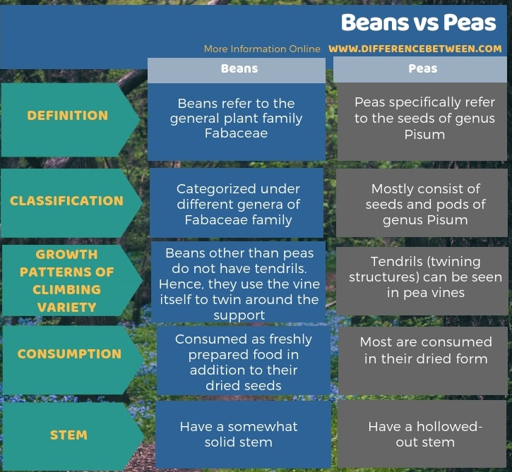 Difference Between Beans and Peas - Tabular Form