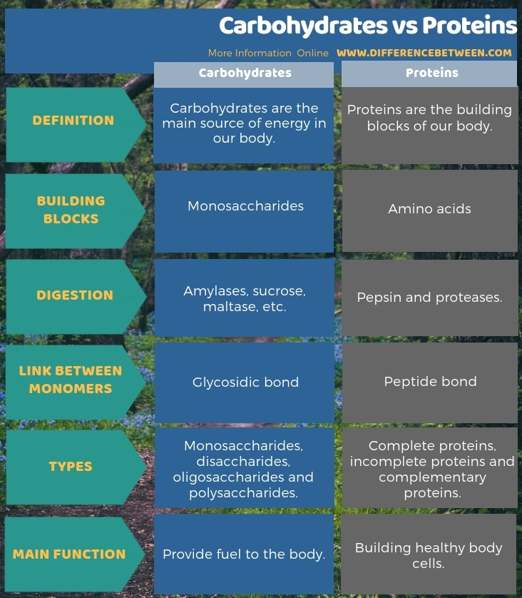 Difference Between Carbohydrates and Proteins in Tabular Form
