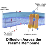 Difference Between Active and Passive Diffusion