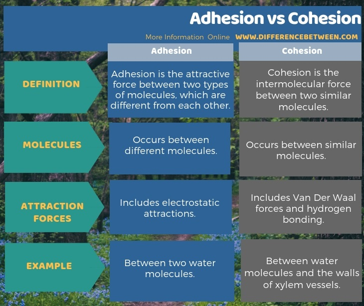 Difference Between Adhesion and Cohesion in Tabular Form
