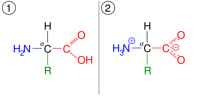 Key Difference Between Ampholyte and Amphoteric