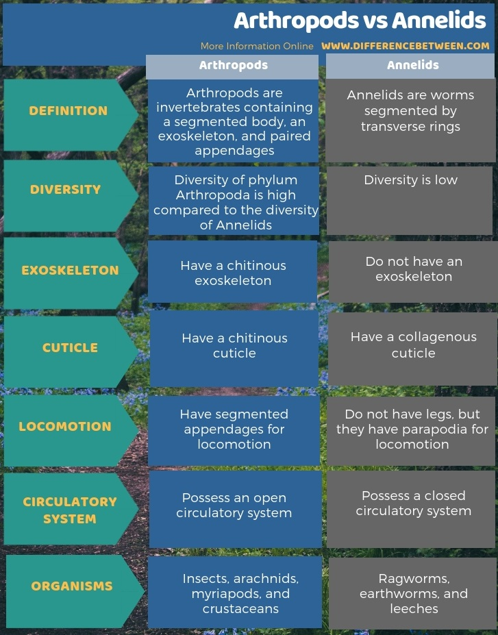 Difference Between Arthropods and Annelids - Tabular Form