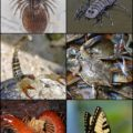 Difference Between Arthropods and Annelids